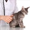 Ветеринарные клиники в Ковернино